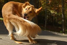 A dog is chasing its tail all the time