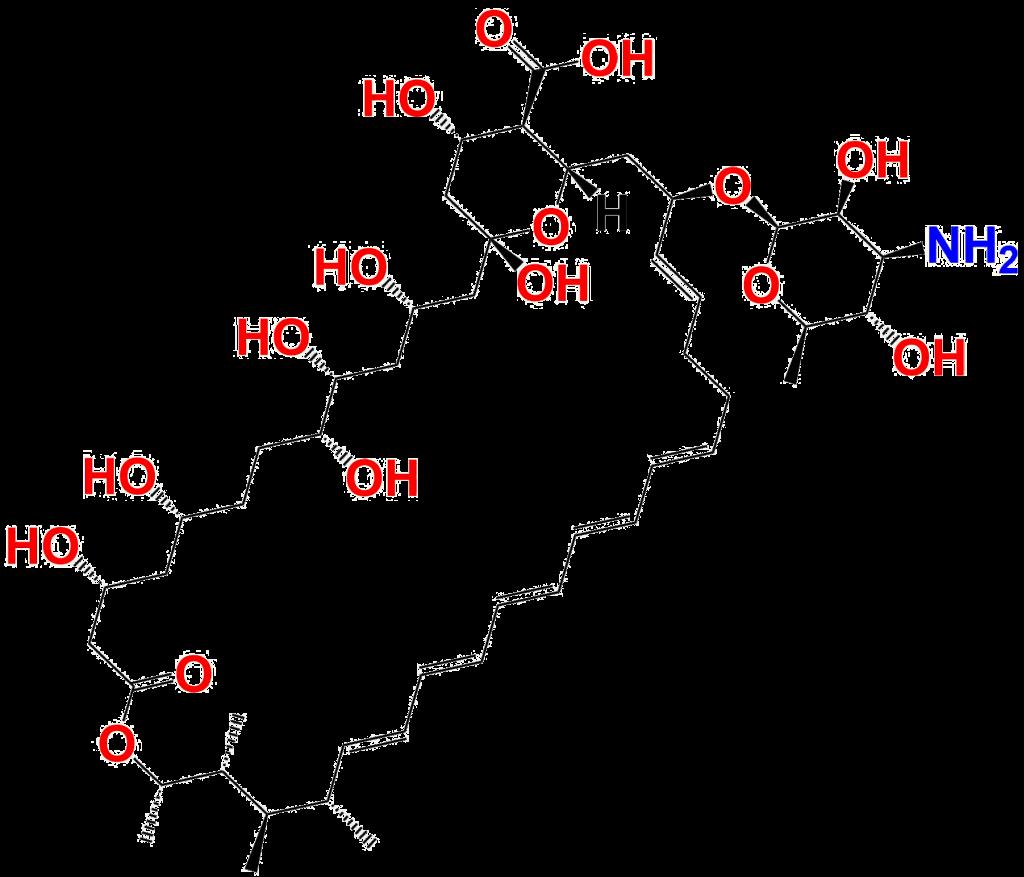 Amphotericin B 1397-89-3 Chemical Structure