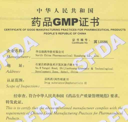 amphotericin B GMP Copy
